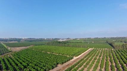 aerial view of orange grove and rail, Israel