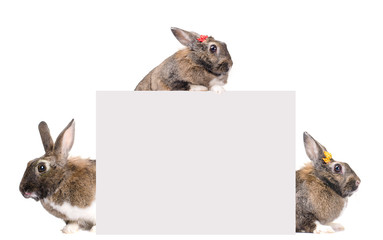 Blank card for text with three bunnies