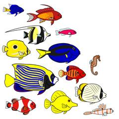 熱帯魚 海水 種類