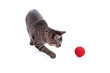 Cat Playing with Ball - 80494271