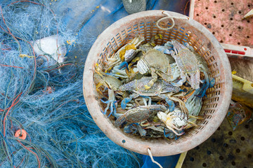 Raw blue crab in basket