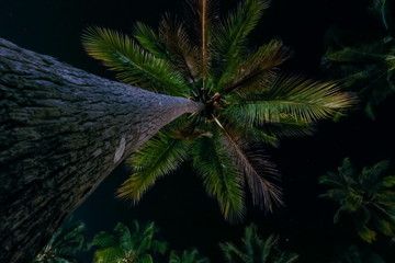Palms in the night time