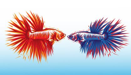 CUPANG FISH