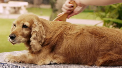Dog Being Brushed