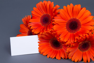 gerbera flowers with blank card for text