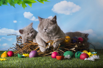 Easter small kittens playing in the grass with painted eggs