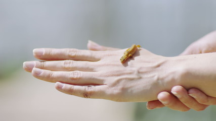 Small yellow lizard crawling across an outstretched hand.