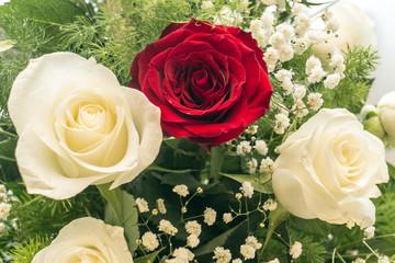 Fiori: rose rosse e bianche