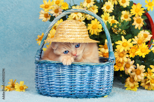 Cute little kitten sitting in a basket near yellow flowers - 80503296
