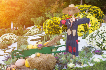 Smiling scarecrow in a vegetable garden in a countryside.