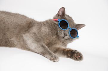 Buffo gatto con occhiali da sole