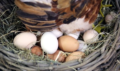 eggs and the egg hatching in the farm's henhouse