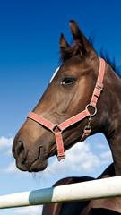 Horse' Head