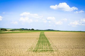 Feld mit Streifen aufgegangener Saat, Österreich