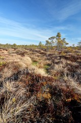 Bog and blue sky at spring time