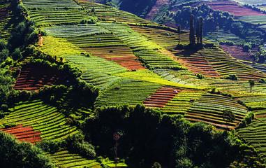 Field in Java