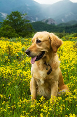 Dog sitting in a field of flowers