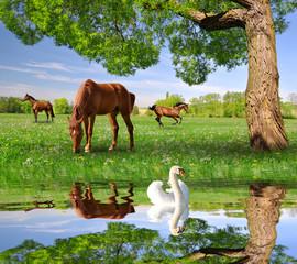 Herd of horses in a spring landscape