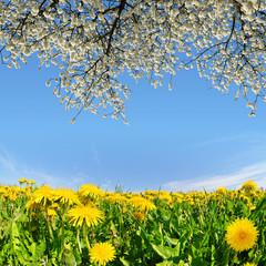 Blooming dandelions in the meadow. Spring landscape.