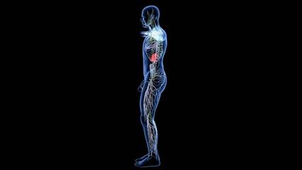 lymphatic system Xray