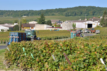 tracteurs transportant caisses de raisin