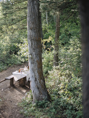 A picnic table set for a party with a cloth and glasses, in a woodland glade.
