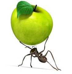 Ant. 3D. Ant Carrying an Apple