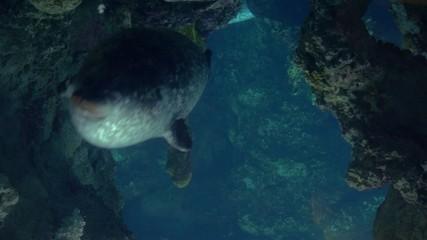aquarium of genoa, seals swimming underwater