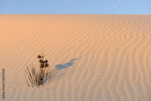 Fotobehang Woestijn Yucca Plant in Rippled Sand in Morning Sunlight