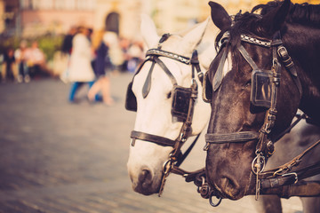 Two Horses Are Harnessed To Cart For Driving Tourists In Prague