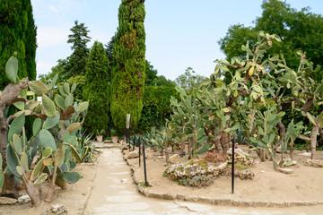 Botanical cactus garden at Balchik palace, Bulgaria