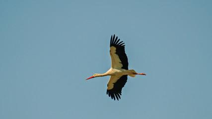 Stork Andalucia Spain