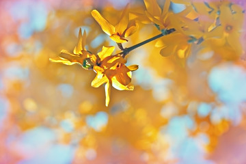 Yellow flowers on tree