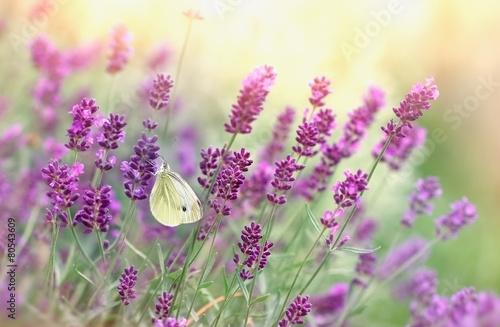 Papiers peints Bestsellers Butterfly on lavender flower