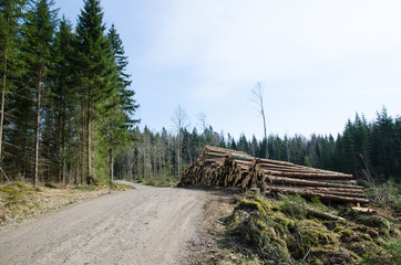 Timber at roadside