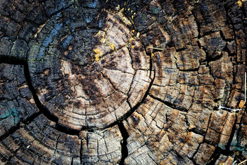 tree stump texture abstract background