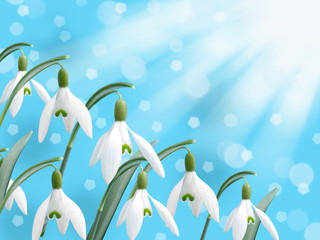 spring white snowdrop flower abstract bokeh snow falling