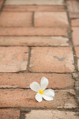 flower on the pavement