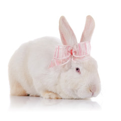 White rabbit with red eyes with a pink bow.