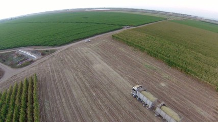 aerial view of truck Loaded with corn, driving in corn filed