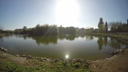 The Lake and Swan