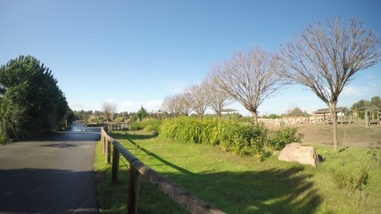 The Green Park and Wooden Fence Near the Road