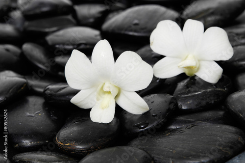 Poster Spa Two white orchid on wet pebbles