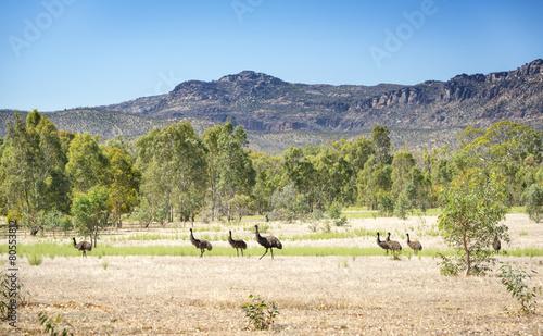 Fotobehang Struisvogel Wild Emu