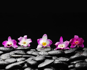Still life with four orchid on wet zen stones