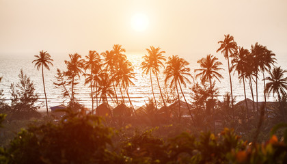 Silhouette of palm trees at Goa, India