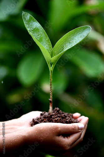 Staande foto Palm boom Two hands holding a young green plant