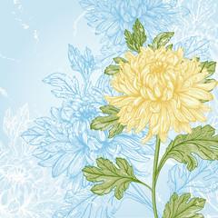Flower chrysanthemum.