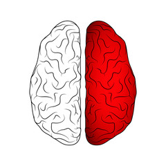 Brain isolated on white
