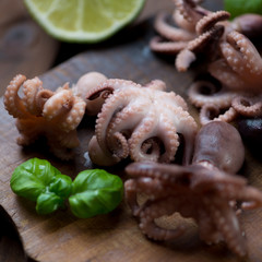Close-up of baby octopuses, selective focus, shallow DOF
